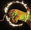Цирки в Миллерово
